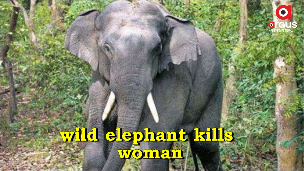 Woman trampled to death by wild tusker in Keonjhar