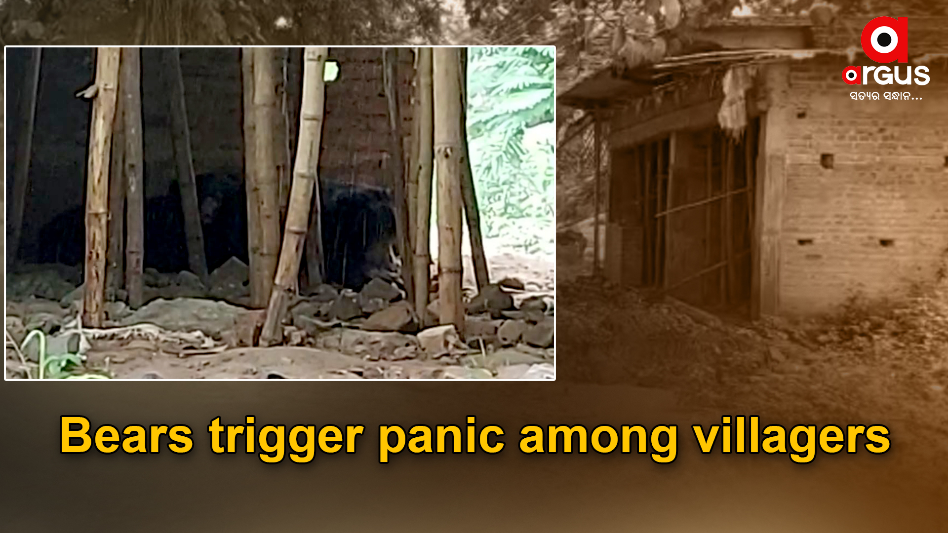 3 bears spotted in Nabarangpur village, people panic