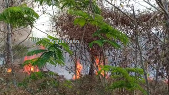 Massive fire breaks out at Botanical Garden in Bhubaneswar