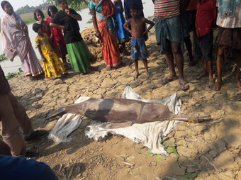 Dead dolphin recovered from Salandi River