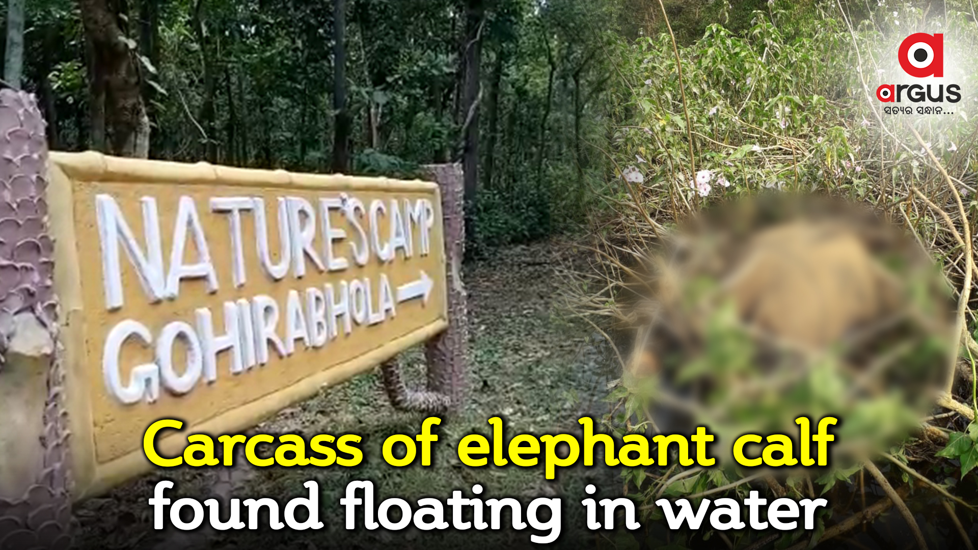 Carcass of elephant calf found floating in dam water in Balasore