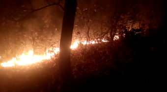 Many valuable trees in Similipal lost due to unabated fire