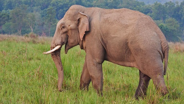 Wild tusker tramples youth to death in Angul