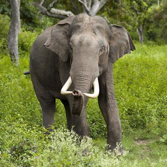 Woman killed, 3 others injured in elephant attack in Khordha village
