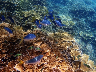 Great Barrier Reef protection to be enhanced with new barge