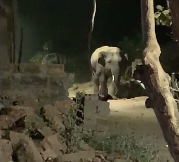 Wild tusker strays into Ravenshaw University second campus in Cuttack
