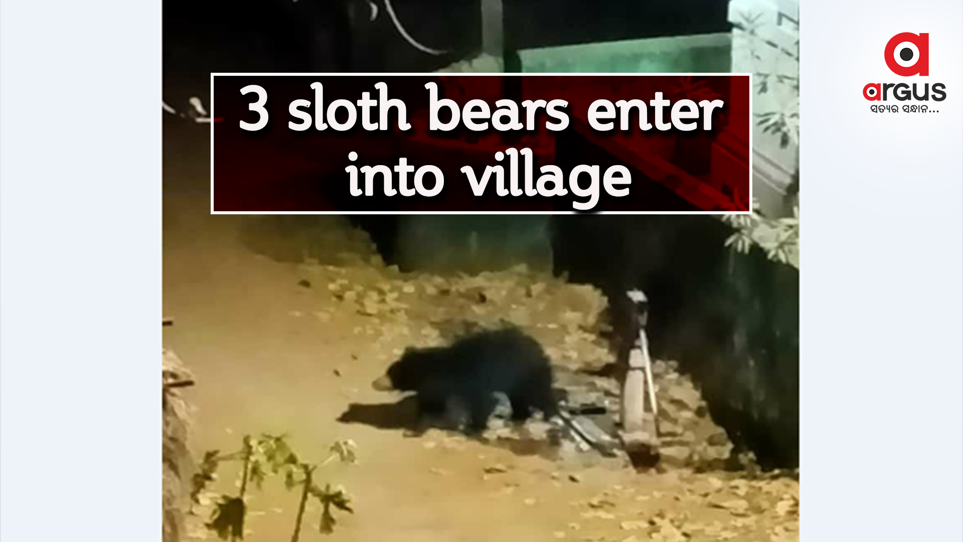 3 sloth bears enter into Keonjhar village, people in panic
