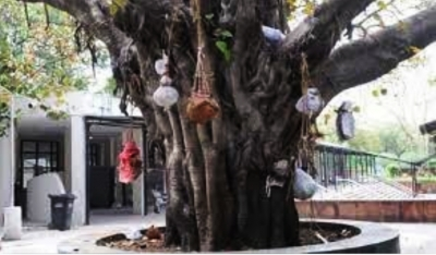 'Ghant' on peepal tree - ghastly reminder of pandemic deaths