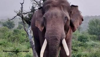 Man killed in elephant attack in Deogarh