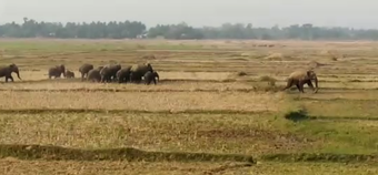 One killed, another critical in wild elephant attack in Ganjam