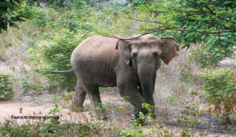 Two trampled to death in Jumbo attack in Mayurbhanj