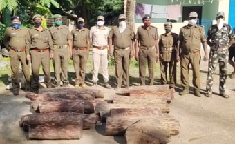 18 pieces of sandalwood logs worth over Rs 15 lakh seized from house in Gajapati