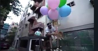 Delhi youTuber arrested for making dog fly with helium balloons