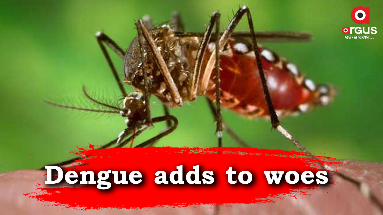 73 more dengue cases detected in Bhubaneswar; count rises to 2,032