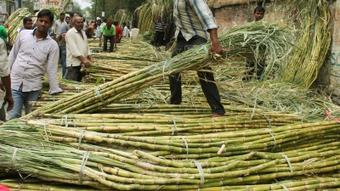 Yogi govt makes record payment to cane growers
