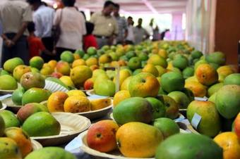 Covid surge casts shadow on mango business in UP