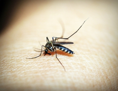 New climate-based solutions for eliminating malaria in India